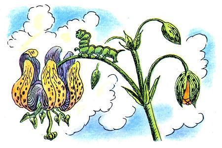 честное гусеничное картинки