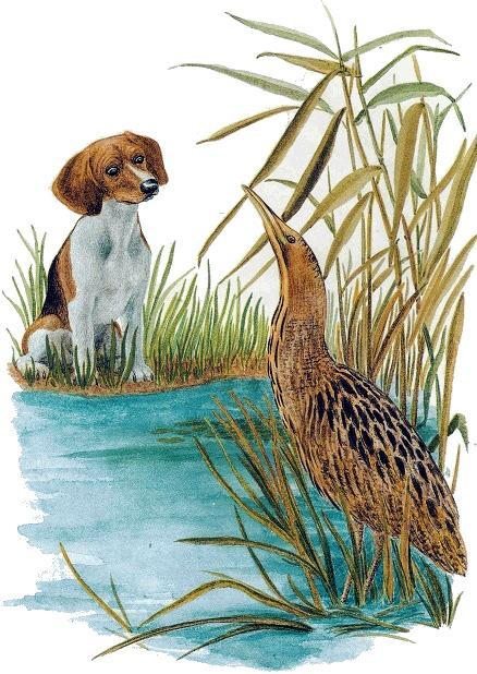 щенок и выпь в воде