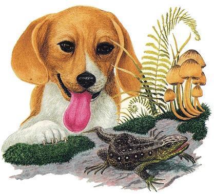 пес и лягушка