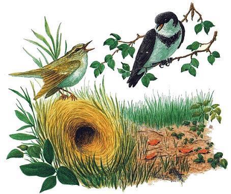 Рисунок к произведению лесные домишки