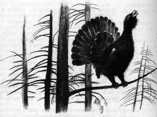 Картинки лесника в осенним лесу