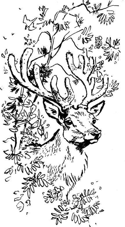 емеля охотник страница 2 дмитрий мамин сибиряк