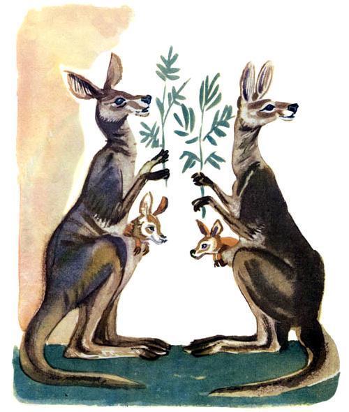 воробей и кенгуру