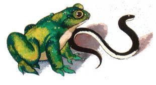 лягушка и змея