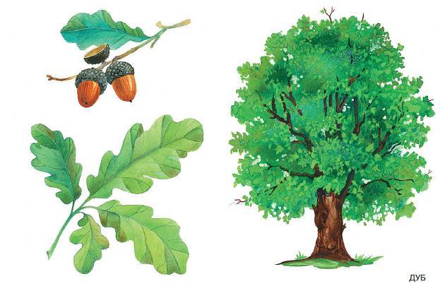 деревья. картинки для детей